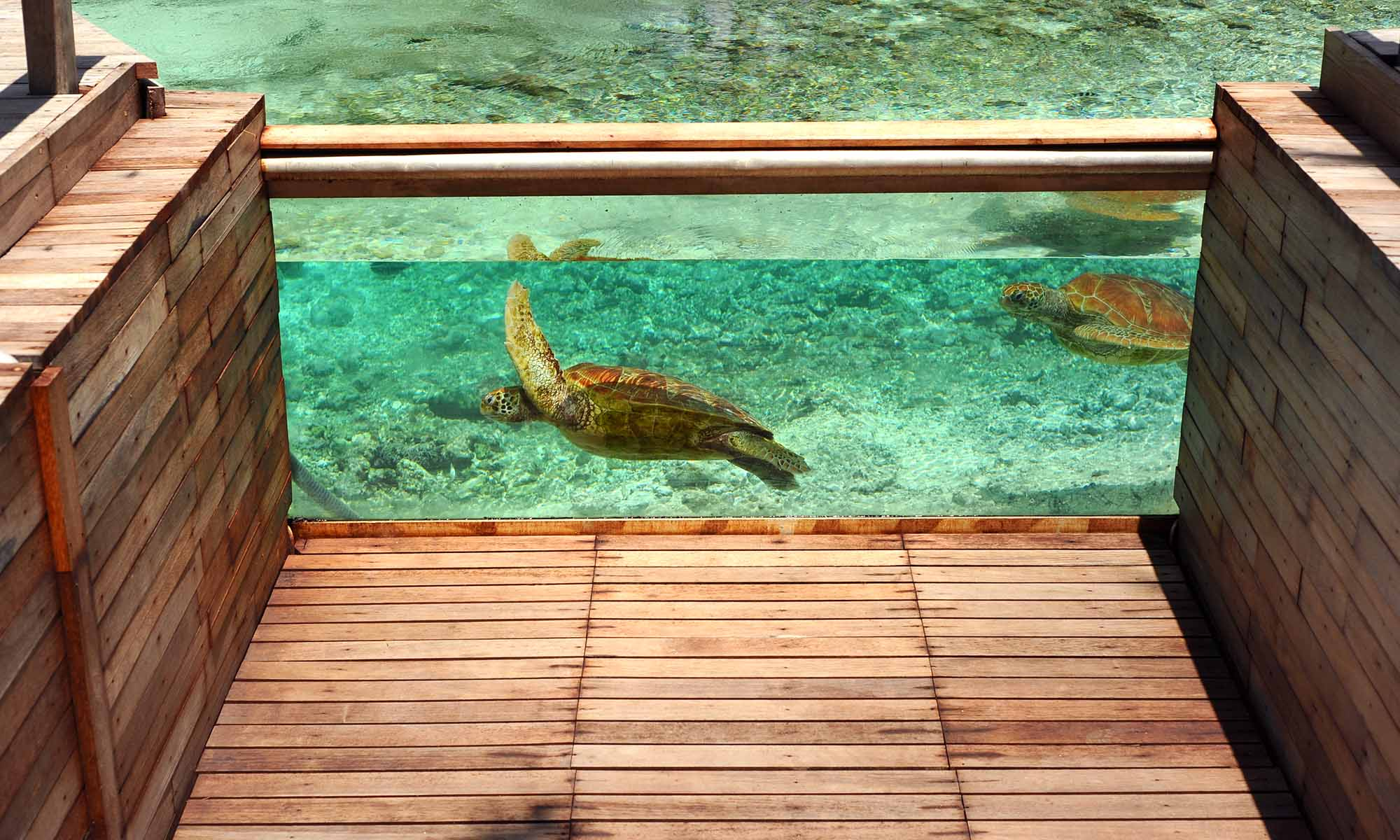 Le Meridien Bora Bora's Renowned Turtle Sanctuary