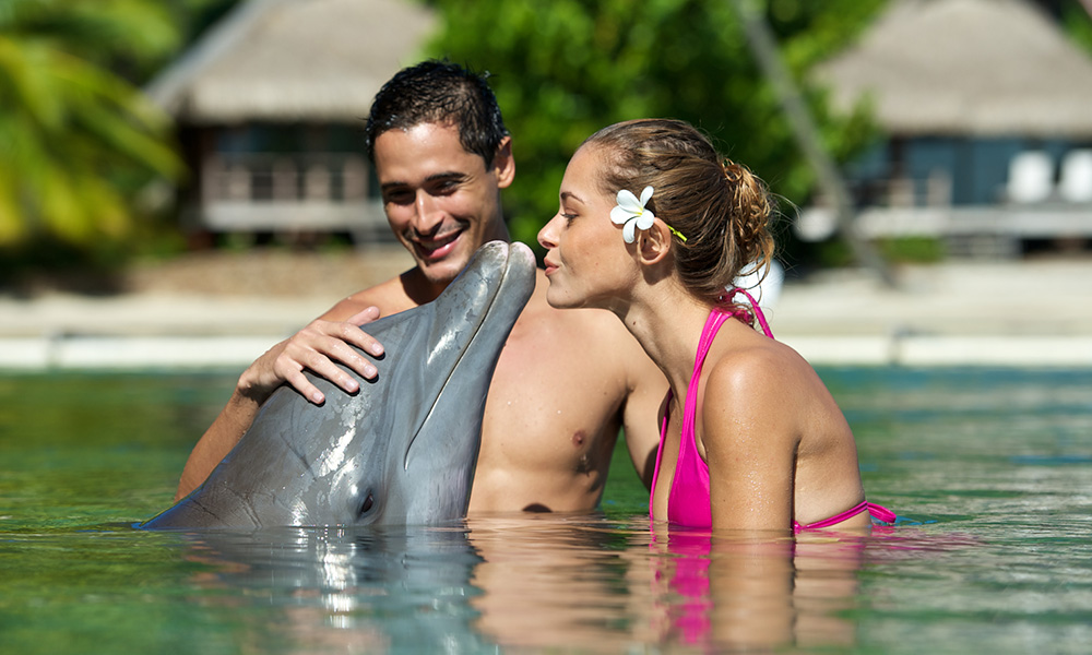 Swim with Dolphins at the InterContinental Moorea Resort & Spa
