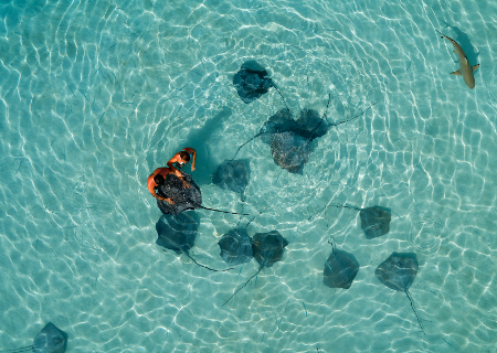 Moorea, Swim With The Rays
