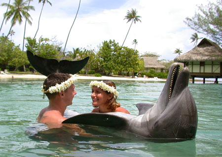Moorea Dolphin Center, InterContinental Moorea Resort & Spa