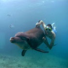 Free Dive With a Dolphin, `Reva`