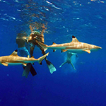 Big Blue Discovery for Advanced Snorkelers
